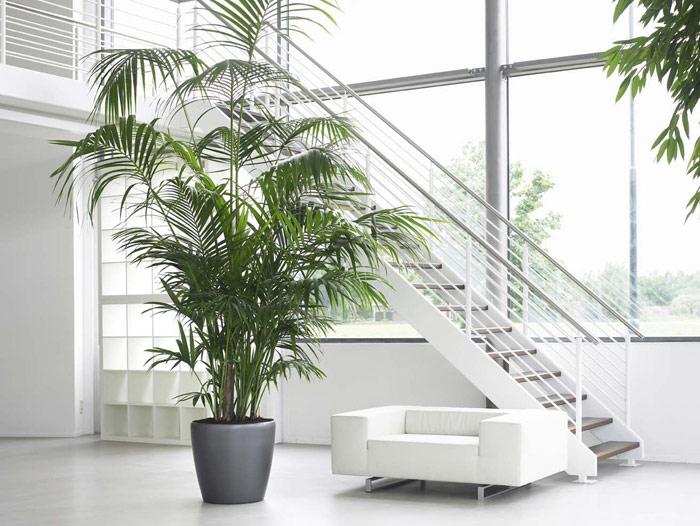 Luijk groenprojecten hovenier in rotterdam luijk for Interieur beplanting