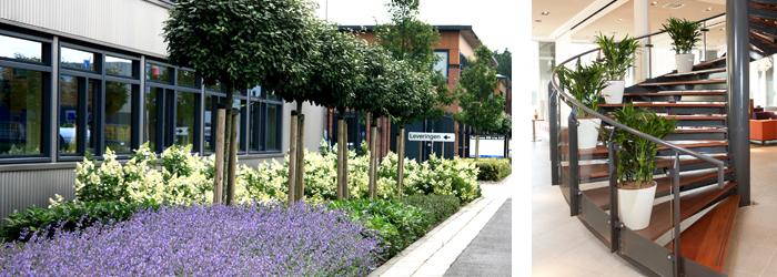 Bedrijven luijk groenprojecten interieurbeplanting - Buitentuin inrichting ...